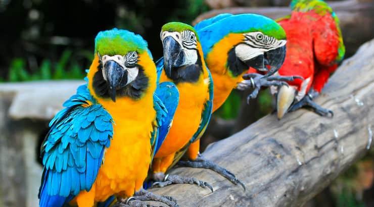 Bahamas Zoo Cheap Admission