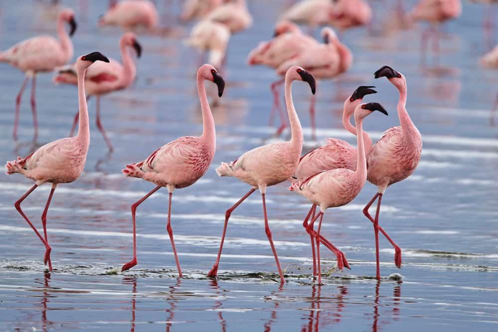 Visit Lake Nakuru in Kenya and see the flamingos