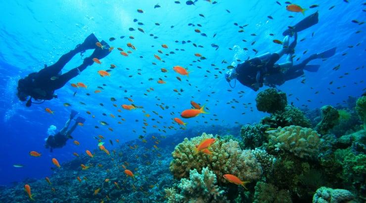 Scuba Diving Negril Jamaica