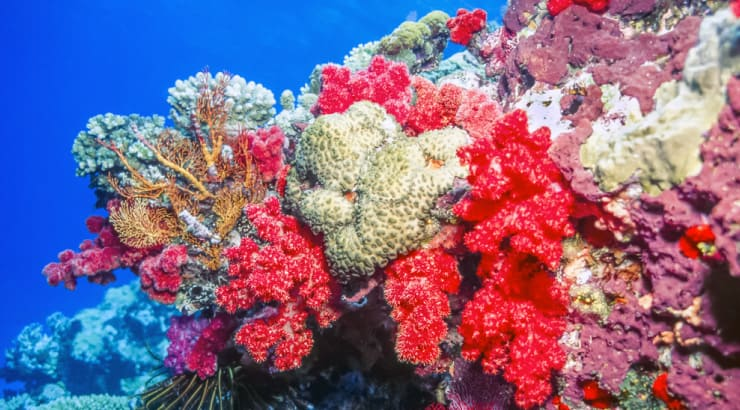 The Value of A Proverbs 31 Woman Exceeds That of Red Corals