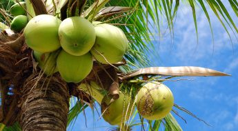 Caribbean Super Foods Which Will Improve Your Health