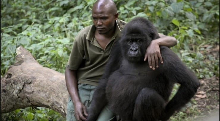 Virunga is a film about the M23 Rebellion at the Virunga National Park in 2012.